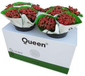 Queen Display, the winning design in the Point of Sale category, designed by Mondi Tire Kutsan, is an innovative and environmentally-friendly concept for the floriculture sector.